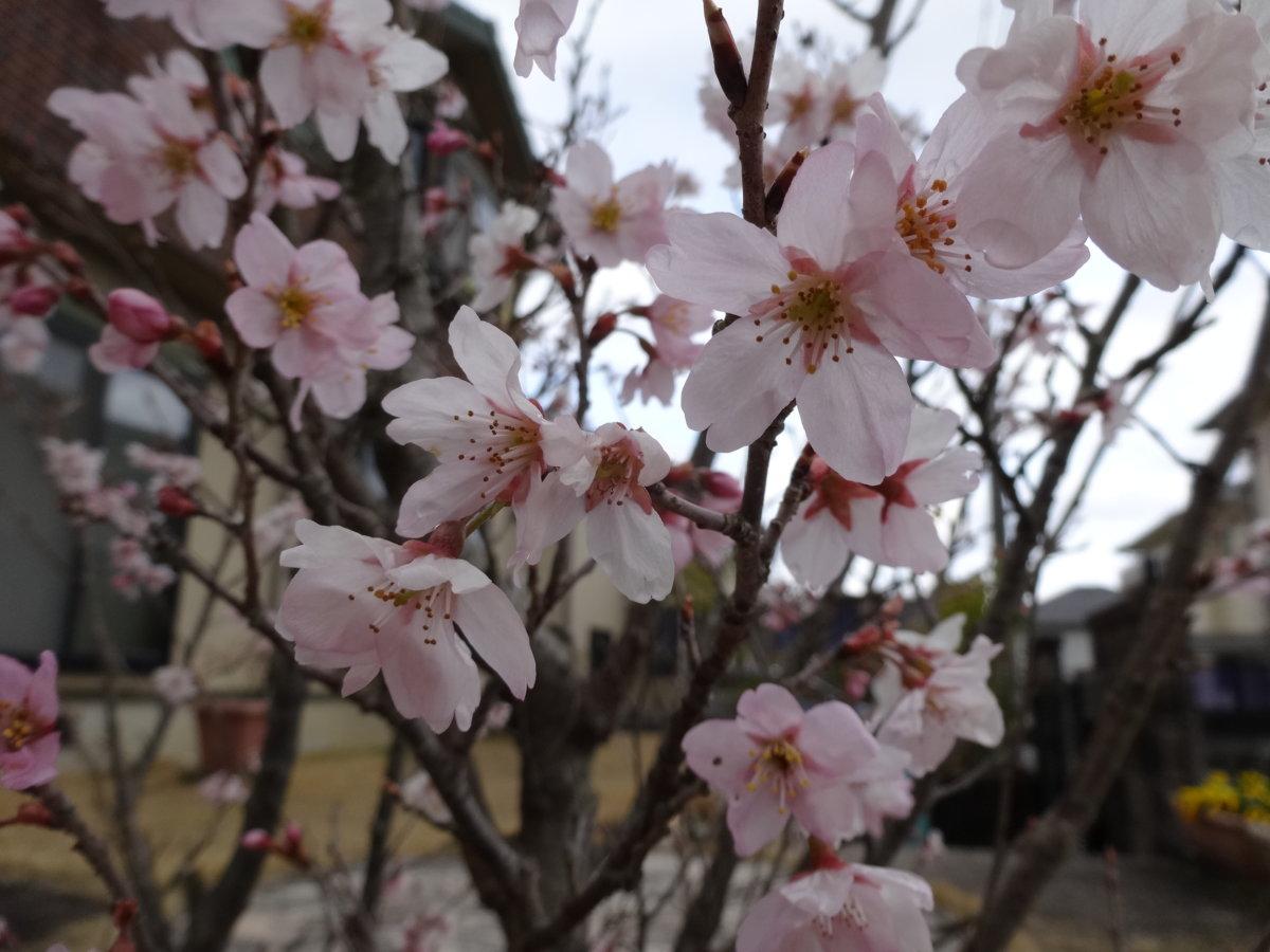 お花見の季節~