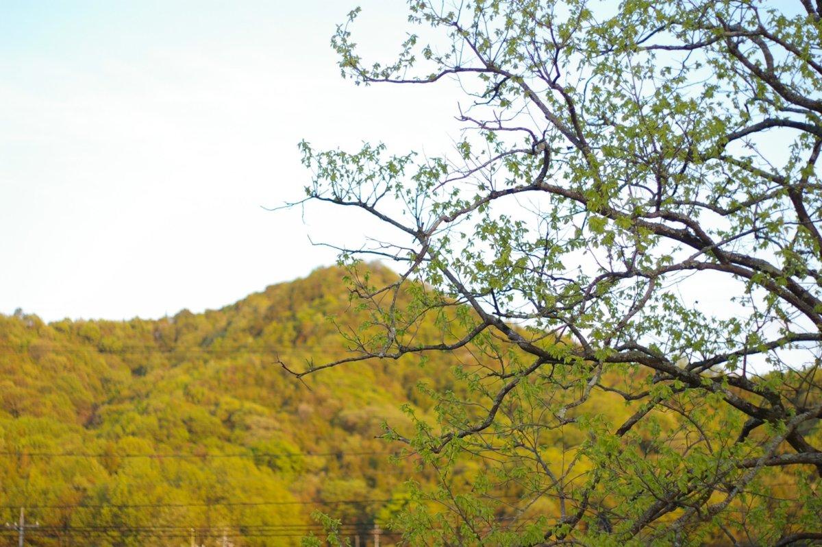 「日々雑草」山と木と庭と