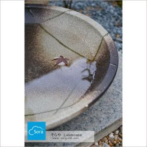 水鉢もみじの葉がきれい