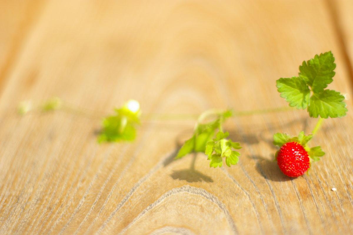 「日々雑草」ヘビイチゴ