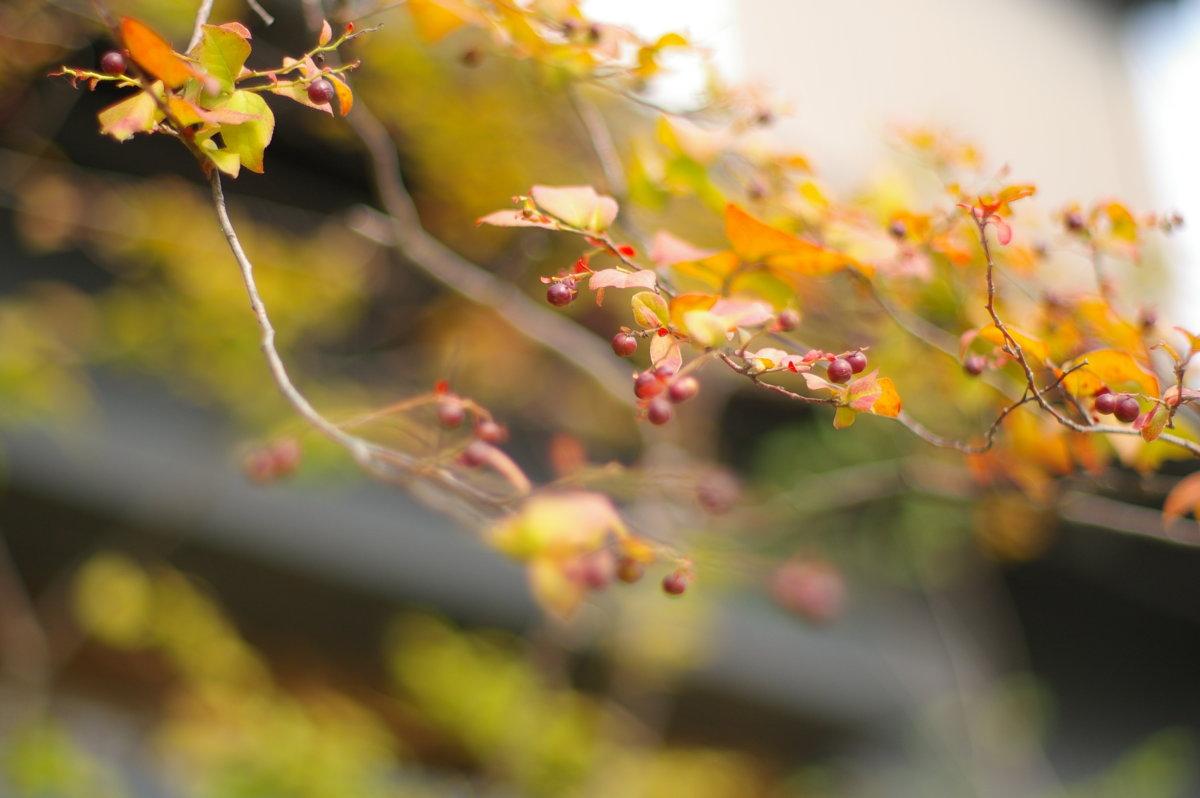 「そらの木々」ナツハゼ