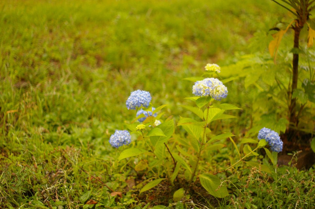 「日々雑草」梅雨の体を整える。